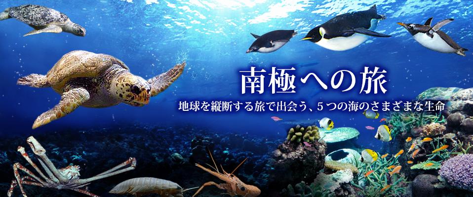 ロマンチックな雰囲気に酔いしれよう!名古屋港水族館で7月18日から開催される「サマーナイトアクアリウム」に注目 - 35641f2b079d80b05de1ed26752a443d