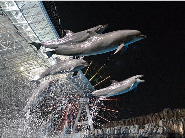 ロマンチックな雰囲気に酔いしれよう!名古屋港水族館で7月18日から開催される「サマーナイトアクアリウム」に注目 - b319dcacf17584d3dd9e920e62a39416