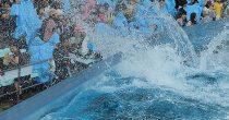 ロマンチックな雰囲気に酔いしれよう!名古屋港水族館で7月18日から開催される「サマーナイトアクアリウム」に注目 - b319dcacf17584d3dd9e920e62a394161 210x110