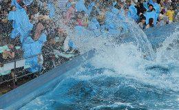 ロマンチックな雰囲気に酔いしれよう!名古屋港水族館で7月18日から開催される「サマーナイトアクアリウム」に注目 - b319dcacf17584d3dd9e920e62a394161 260x160