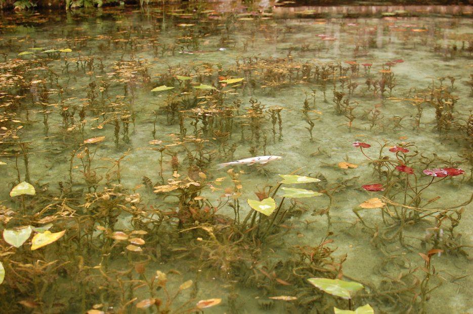 岐阜の新名所?!「モネの池」のある関市へドライブ - DSC 0292 935x620
