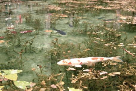 岐阜の新名所?!「モネの池」のある関市へドライブ