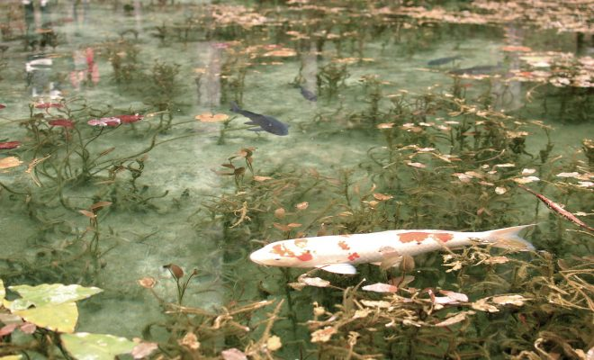 岐阜の新名所?!「モネの池」のある関市へドライブ - DSC 0298 660x400