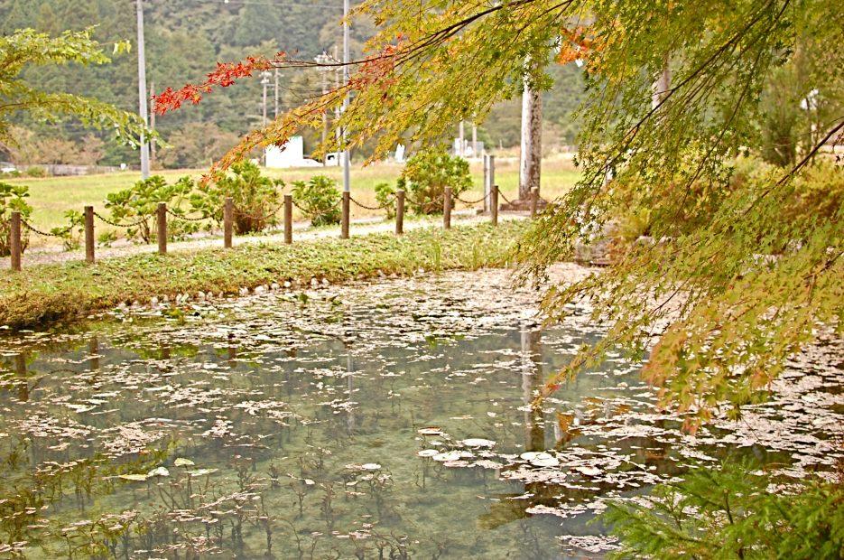 岐阜の新名所?!「モネの池」のある関市へドライブ - DSC 0305 935x620