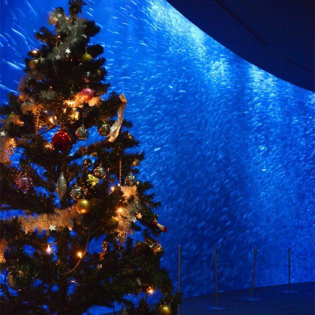 名古屋のクリスマス・イブに幻想的な花火が打ちあがる!12月24日開催「ISOGAI花火劇場 in 名古屋」 - da9210eecf9d167046a184d48e72b680 620x620