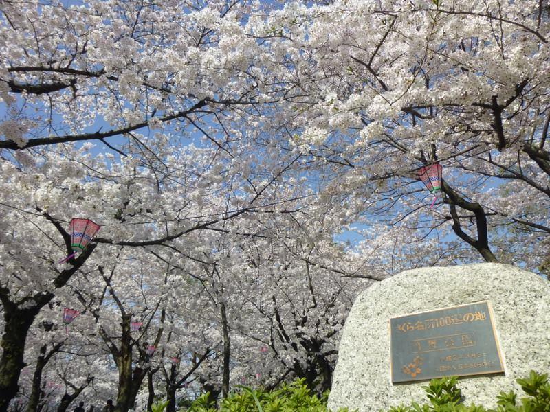 今年のお花見はどこに行く?名古屋から気軽に行ける桜の名所6選 - 12832477 613085168830219 2768031284247042080 n