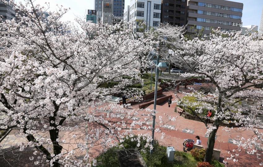 満開の桜アートで花見を楽しもう!「SAKURA TOWER by NAKED」 - 4