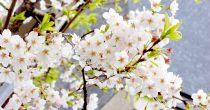 今年のお花見はどこに行く?名古屋から気軽に行ける桜の名所6選 - DSC 0065 210x110