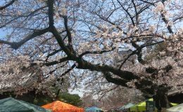 桜とお寺に囲まれてお散歩しよう。3月開催「東別院手づくり朝市」に行ってきました - IMG 4442 260x160
