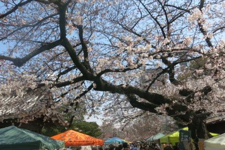 桜とお寺に囲まれてお散歩しよう。3月開催「東別院手づくり朝市」に行ってきました