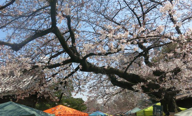 桜とお寺に囲まれてお散歩しよう。3月開催「東別院手づくり朝市」に行ってきました - IMG 4442 660x400