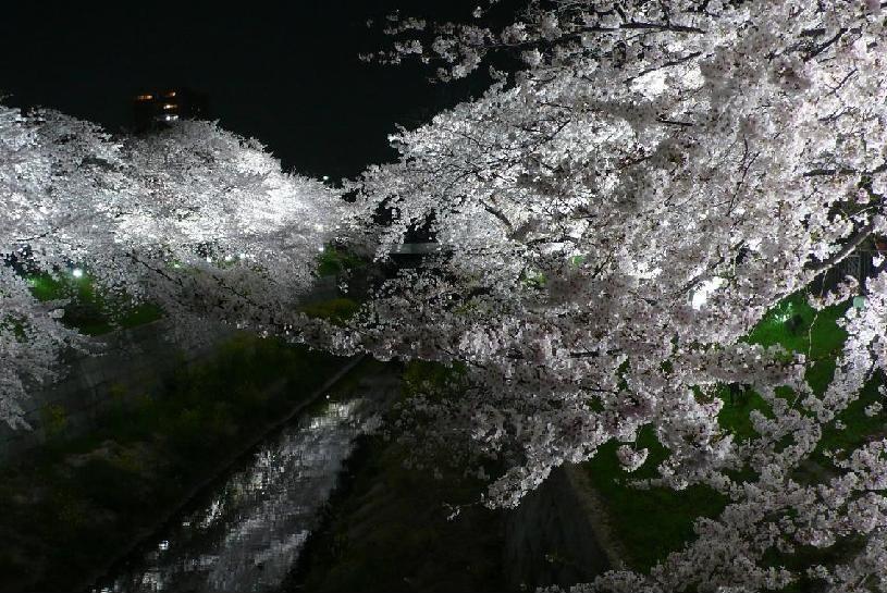 今年のお花見はどこに行く?名古屋から気軽に行ける桜の名所6選 - lightup2