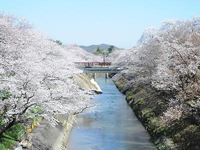今年のお花見はどこに行く?名古屋から気軽に行ける桜の名所6選 - sakura