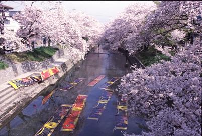 今年のお花見はどこに行く?名古屋から気軽に行ける桜の名所6選 - utrv8o000000043r