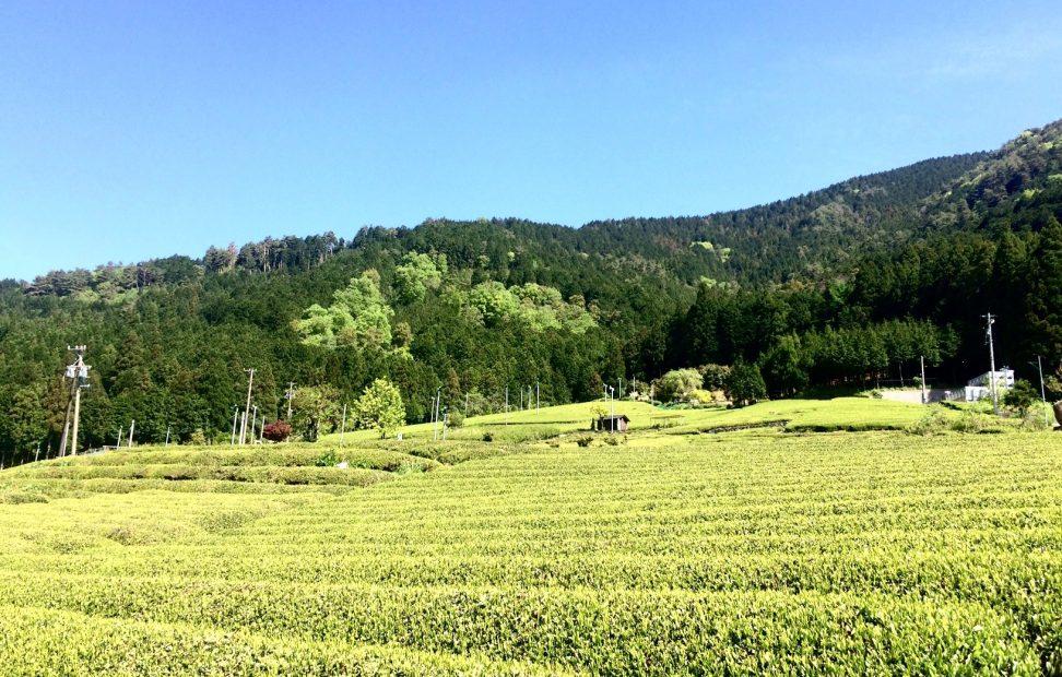 岐阜のマチュピチュ!「天空の茶畑」がある揖斐川町上ヶ流の絶景スポット - IMG 7923 1 972x620