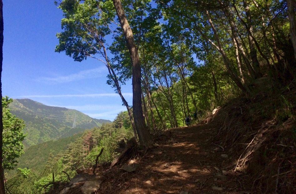 岐阜のマチュピチュ!「天空の茶畑」がある揖斐川町上ヶ流の絶景スポット - IMG 7929 1 948x620