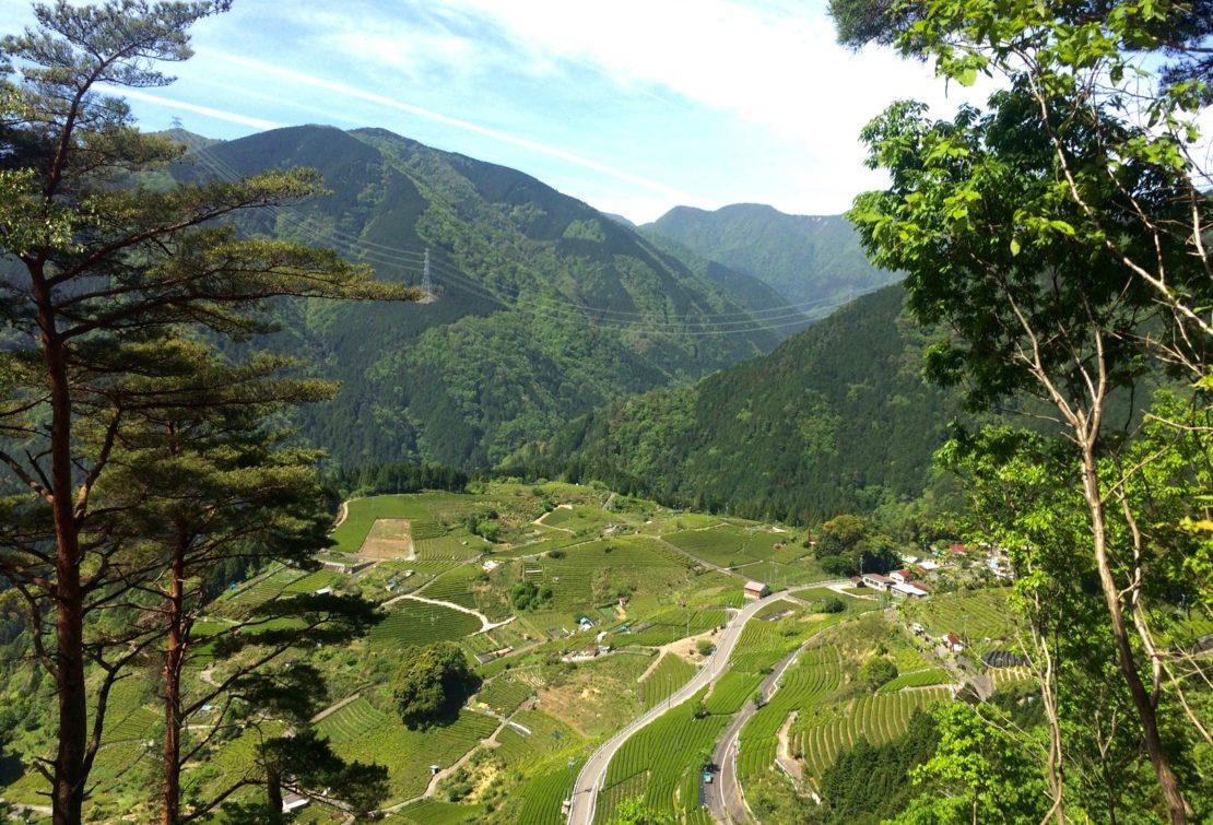 岐阜のマチュピチュ!「天空の茶畑」がある揖斐川町上ヶ流の絶景スポット