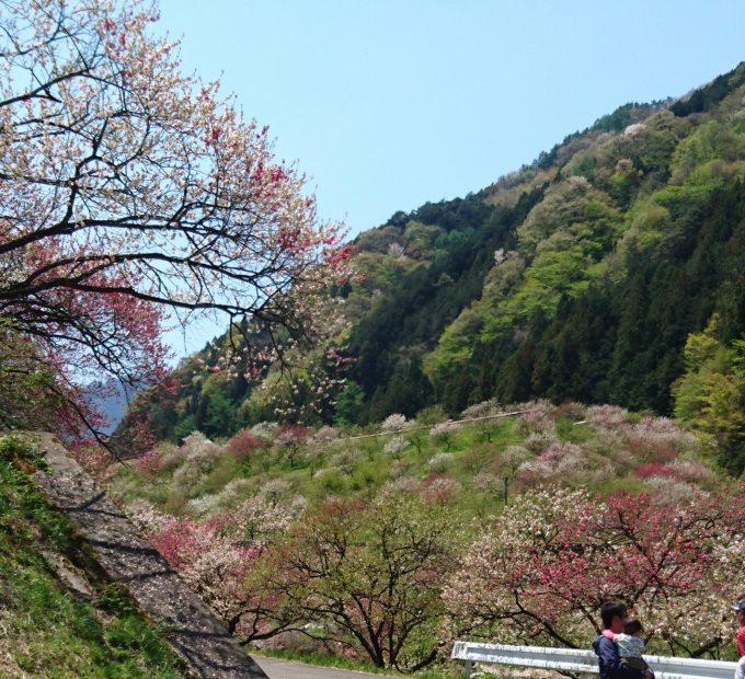 名古屋から約1時間半で楽しめる!「ヘブンズそのはら」日本一の星空ツアー - f01583945b10f284e6385fba43e64211 e1462262946126 680x620