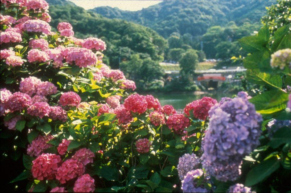 http://www.katahara-spa.jp/ajisai/