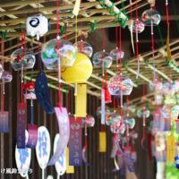 夏休みのお出かけはここで決まり!夏の豊田市のイベント情報まとめ