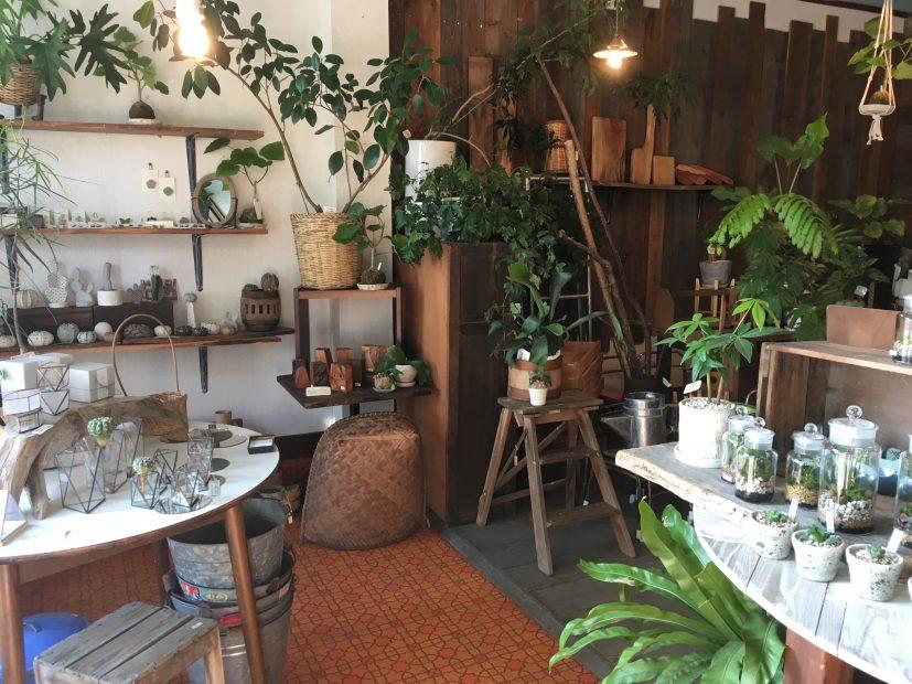毎日の暮らしにグリーンを。千種区の雑貨と植物のお店「Kitowa(樹と環)」 - IMG 7706 5 827x620