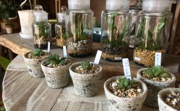 毎日の暮らしにグリーンを。千種区の雑貨と植物のお店「Kitowa(樹と環)」 - IMG 7707 5 260x160