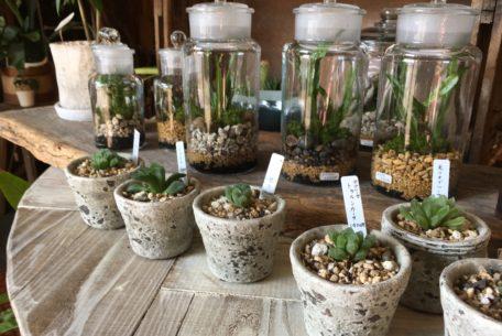 毎日の暮らしにグリーンを。千種区の雑貨と植物のお店「Kitowa(樹と環)」