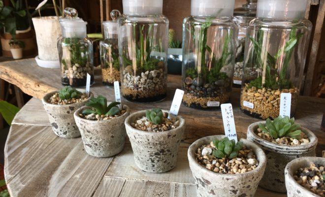毎日の暮らしにグリーンを。千種区の雑貨と植物のお店「Kitowa(樹と環)」 - IMG 7707 5 660x400