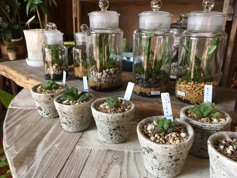 毎日の暮らしにグリーンを。千種区の雑貨と植物のお店「Kitowa(樹と環)」 - IMG 7707 5 827x620