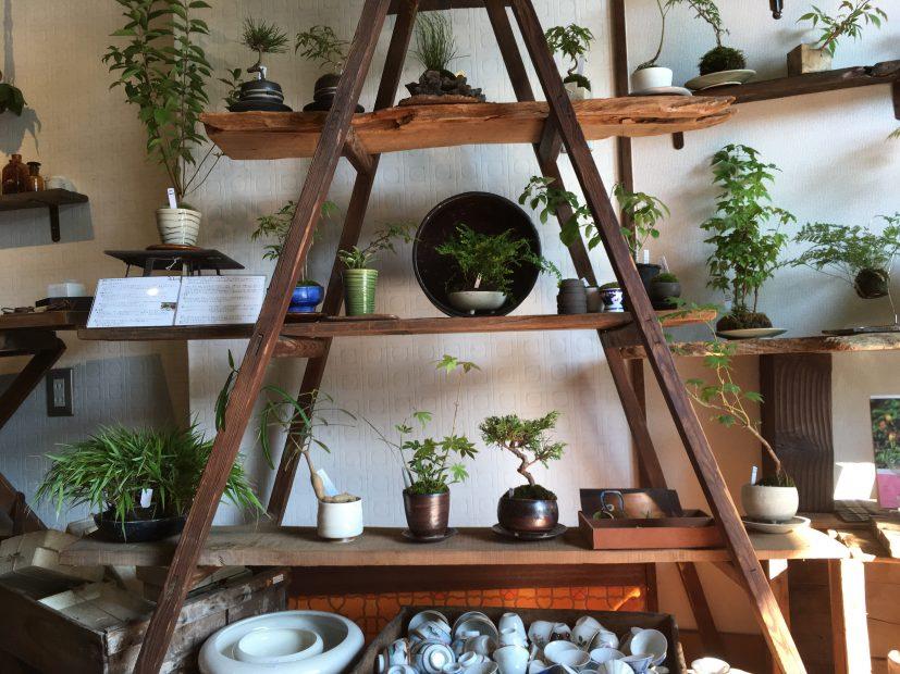 毎日の暮らしにグリーンを。千種区の雑貨と植物のお店「Kitowa(樹と環)」 - IMG 7708 5 827x620