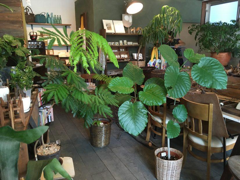 毎日の暮らしにグリーンを。千種区の雑貨と植物のお店「Kitowa(樹と環)」 - IMG 7713 5 827x620