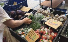 オアシス21で新鮮な野菜をゲット!毎週土曜朝「オーガニックファーマーズ朝市村」 - 14302934 1331238196906204 1216288194 n 260x160