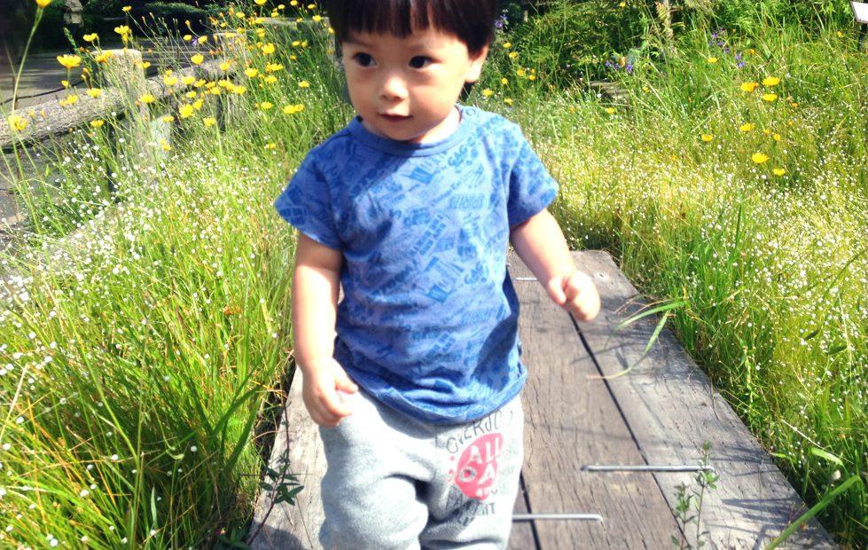紅葉の前だからこそ植物園が面白い!子どもと一緒に東山動植物園を楽しむ方法 - 02 4 979x620