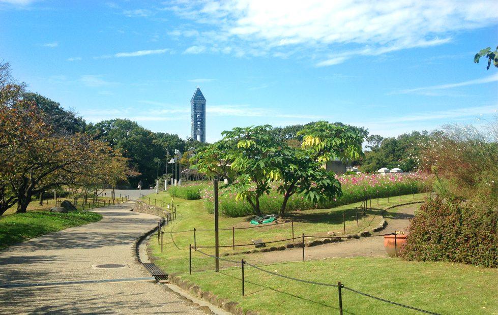 紅葉の前だからこそ植物園が面白い!子どもと一緒に東山動植物園を楽しむ方法 - 06 1 979x620