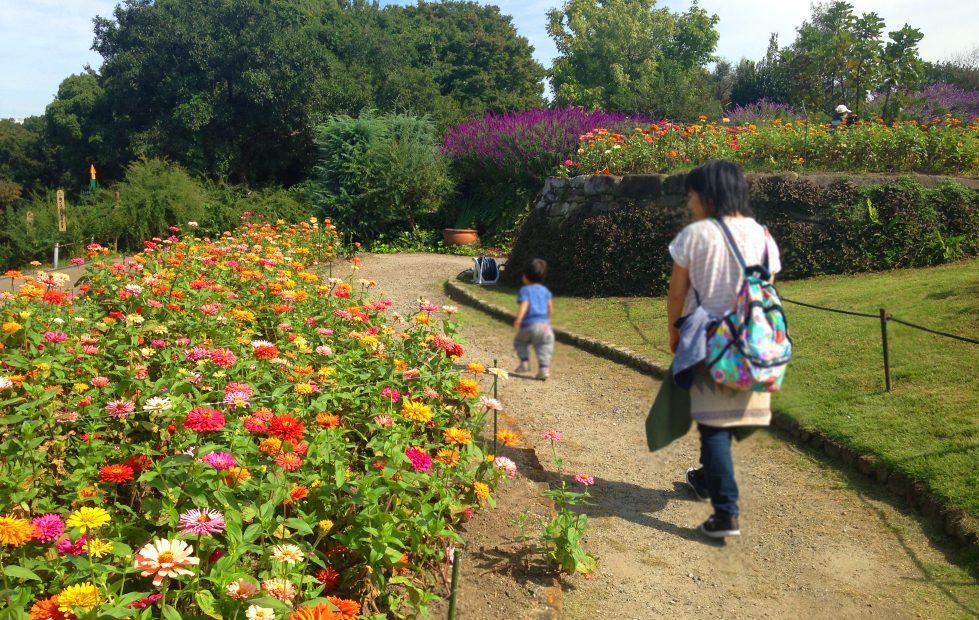 紅葉の前だからこそ植物園が面白い!子どもと一緒に東山動植物園を楽しむ方法 - 09 979x620