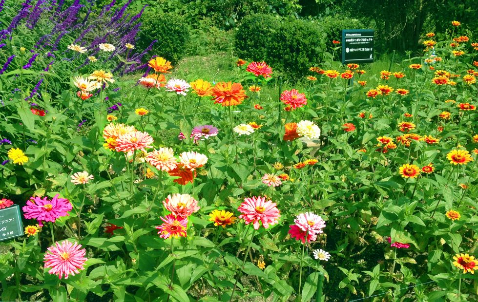 紅葉の前だからこそ植物園が面白い!子どもと一緒に東山動植物園を楽しむ方法 - 08 2 979x620
