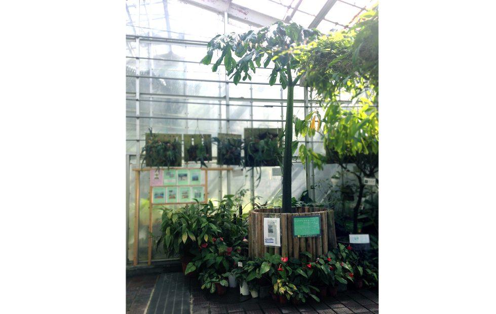 紅葉の前だからこそ植物園が面白い!子どもと一緒に東山動植物園を楽しむ方法 - 15 2 979x620