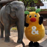 今週末のお出かけに最適なのはここ!東山動物園が再開!