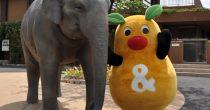 今週末のお出かけに最適なのはここ!東山動物園が再開! - 819b5fc78131ca5c3d32a41a707b0ce0 210x110