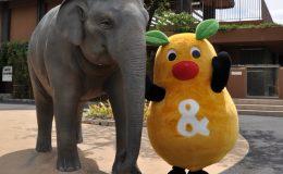 今週末のお出かけに最適なのはここ!東山動物園が再開! - 819b5fc78131ca5c3d32a41a707b0ce0 260x160