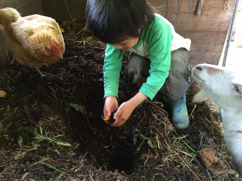 亡くなった鳥を堆肥に入れて土に還している様子