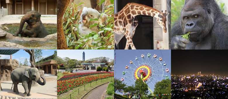 今週末のお出かけに最適なのはここ!東山動物園が再開! - img