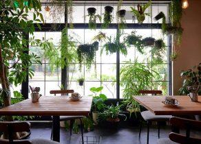 お花が食べられる!?自家農園で育てられたエディブルフラワーのカフェ - 46ecbccfb193df578c7bd1c4cdd4c769 292x210