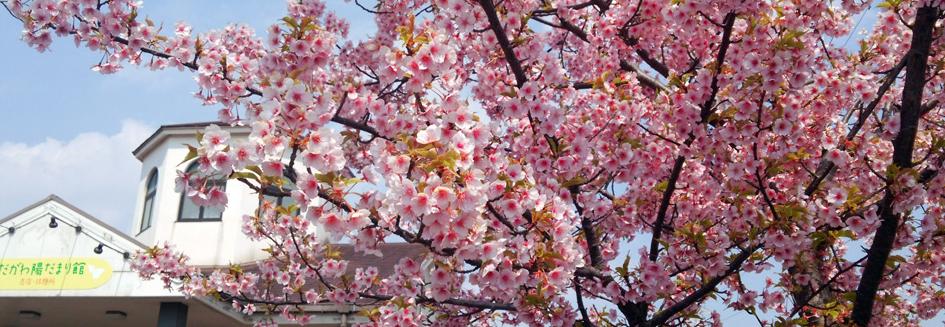 春のお出かけどこ行く?名古屋周辺のおすすめ公園10選! - todagawa ryokuchi sakura