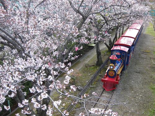 桜の美しさは、春の美しさ。愛知・岐阜のお花見スポット7選 - 0d40a5e4a645fc6b96e767d64ac0878e