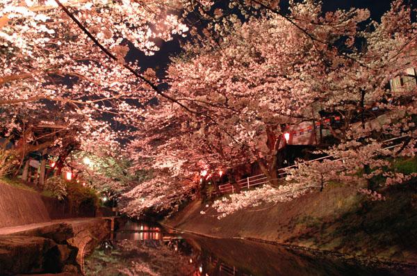 桜の美しさは、春の美しさ。愛知・岐阜のお花見スポット7選 - 113 1