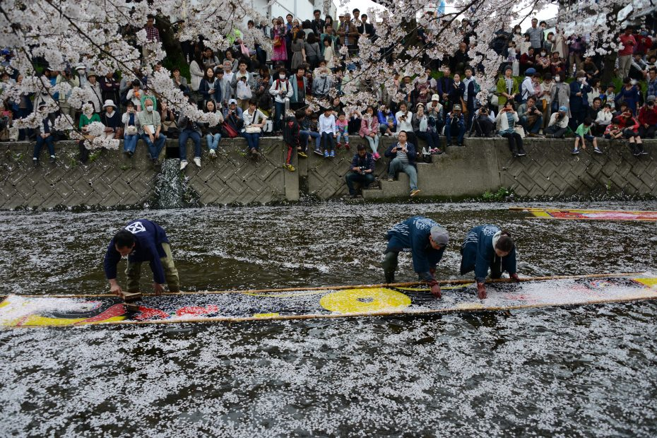 一度は訪れたい!さくらの名所100選の岩倉市桜まつりとのんぼり洗いの風物詩 - DSC 8390 930x620