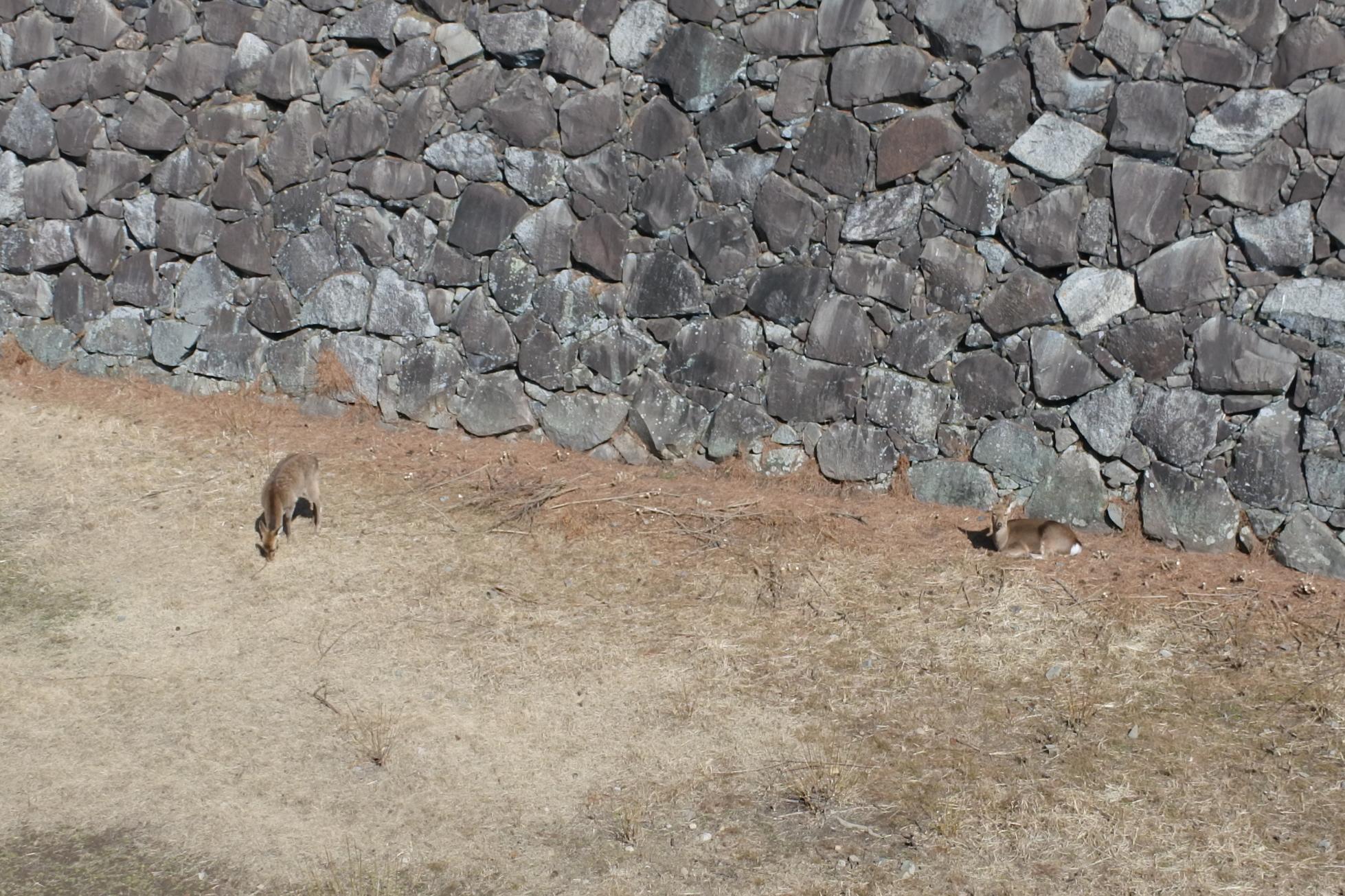 歴史に興味がなくても楽しめる!鹿にグルメに、名古屋城の見所満載ガイド - d50b15e8ec57ecd70f4797cd6331c2a8