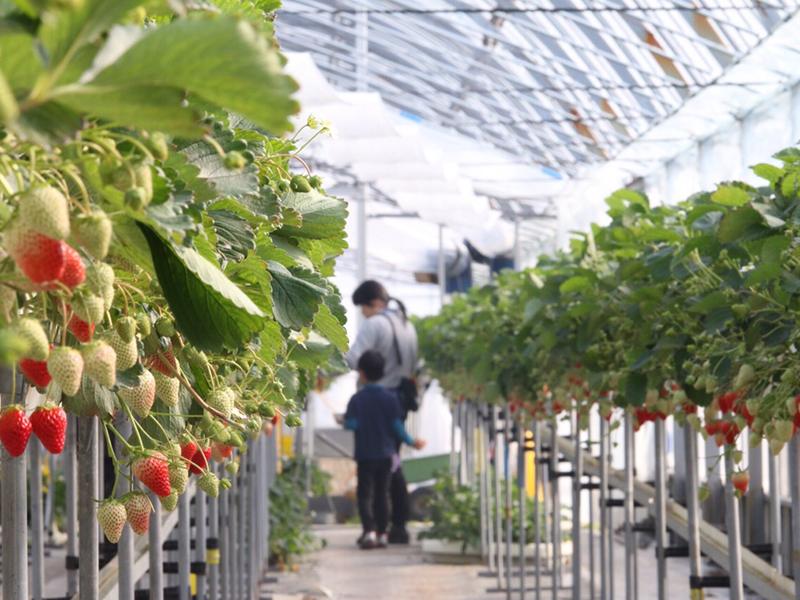 カフェスタイルが話題!静岡県磐田市のいちご狩りスポット『くりみ苺園』 - farm2