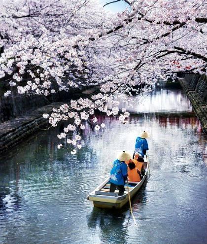 桜の美しさは、春の美しさ。愛知・岐阜のお花見スポット7選 - image 1